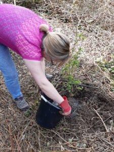 helping keep the new trees healthy